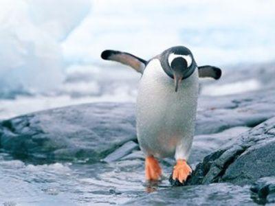 腾讯(00700)财报揭秘:对利润释放极度克制,鹅厂再一次被低估了?