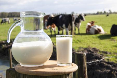 港股异动︱港股乳业股随A股走高 蒙牛乳业(02319)涨超6%