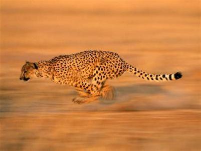 猎豹移动(CMCM.US)Q1营收10.856亿元,接近公司指引上限
