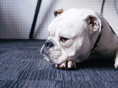 美国最大宠物电商Chewy(CHWY.US)登陆纽交所 上市首日股价暴涨约60%