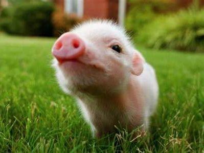 港股异动︱猪肉概念随A股快速攀升 中粮肉食(01610)升逾6%