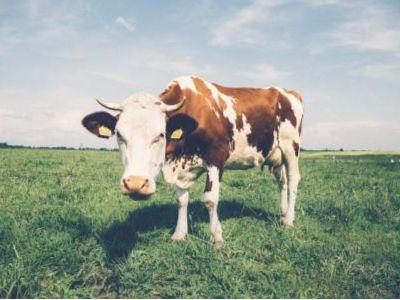 奶源争夺暗流涌动 新乳业拟7亿入股现代牧业(01117)成蒙牛外第二大股东