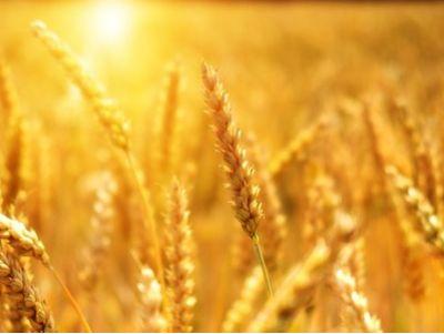 新股消息 | 香港领先食米加工商联诚集团申请港交所创业板上市