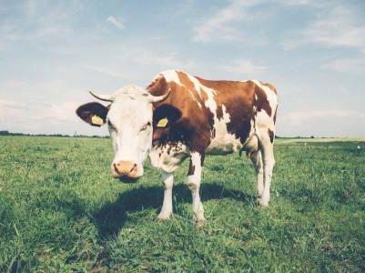 卖掉君乐宝收购贝拉米 蒙牛(02319)的奶粉算盘